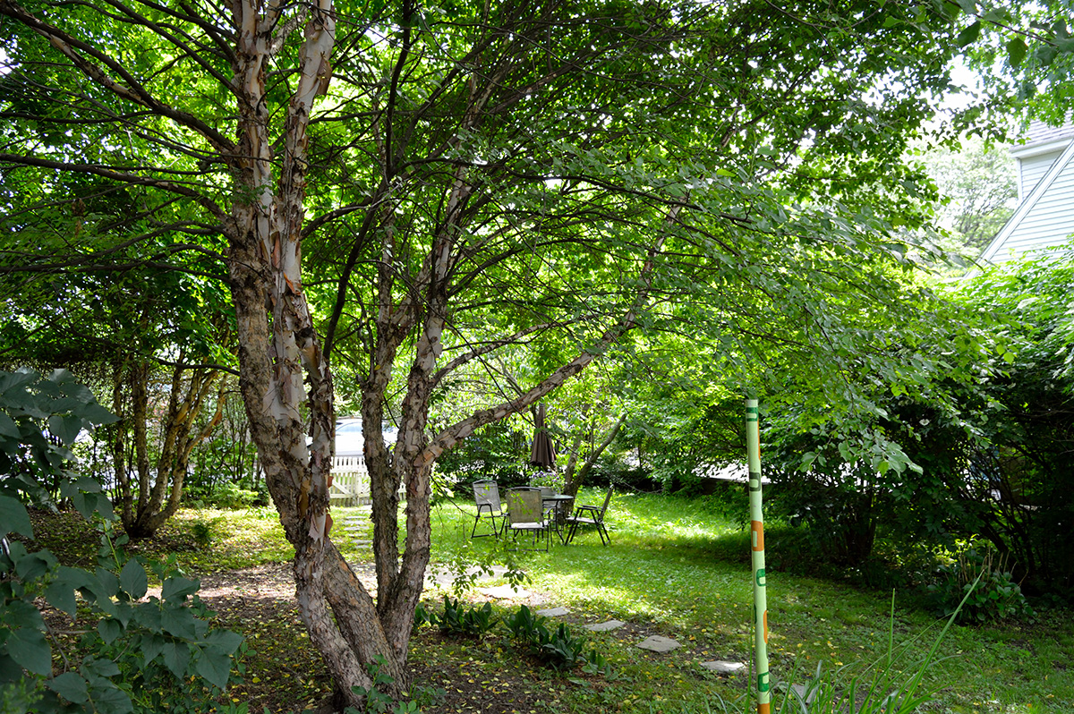 back-yard-tree-pole-hori